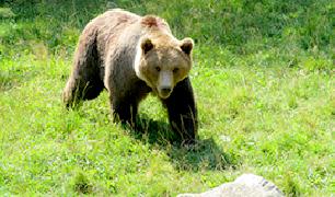 Observació de fauna salvatge