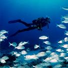 Activitats nàutiques i de natura a l´Estartit i a les illes Medes