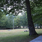 Àrea de pícnic de Conangles
