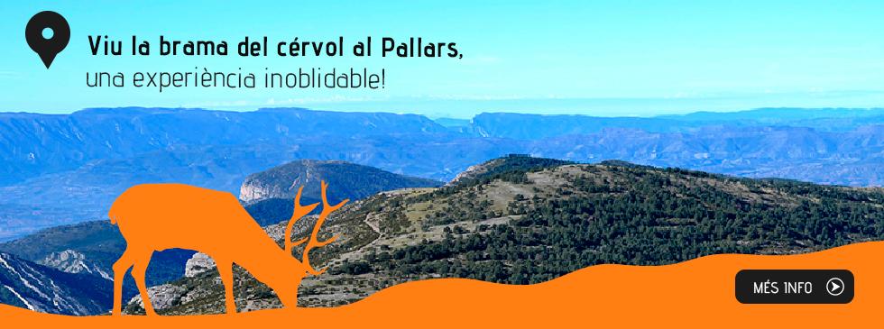 Viu la brama del cérvol al Pallars, una experiència inoblidable!