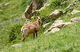 Fauna salvatge al Boumort (2 dies)