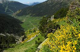Coronallacs: la volta a Andorra (5 dies)
