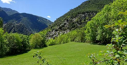 Mig Pallars