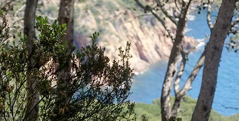 Muntanyes de Begur