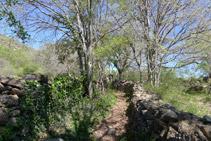 Murs de pedra seca defineixen el camí.
