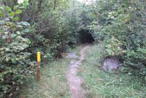 El sender és ben clar i trobem estaques amb pintura groga.