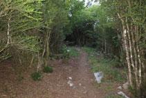 Els avellaners són els protagonistes com a elements de vegetació en aquest inici de ruta.