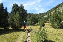El bosc deixa pas a una zona oberta.