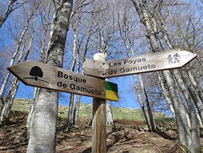 Bosc de Gamueta des del refugi de Linza