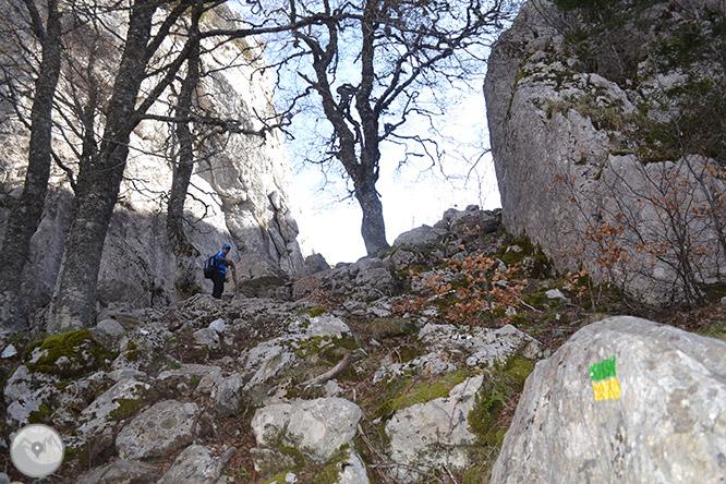 Bosc de Gamueta des del refugi de Linza 1
