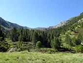Camí de Prat Primer i bosc de la Caülla
