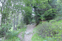 Entre el bosc de ribera i l´avetosa.
