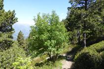Bosc de la Caülla.