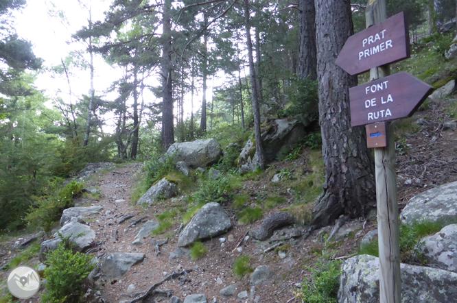 Camí de Prat Primer i bosc de la Caülla 1