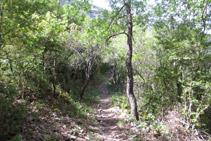 Durant molts trams del barranc, el bosc és dens.