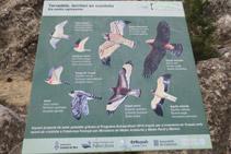 Panell informatiu que ens dóna informació dels ocells rapinyaires de la zona.
