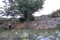 Travessem una zona de feixes i murs de pedres.