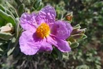 La flora és espectacular i riquíssima en aquesta Reserva Integral.
