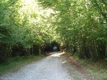 La pista avança per un bosc molt ombrívol, amb avellaners i faigs.
