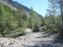 Transitem per un areny ple de còdols, sediments i vegetació de ribera.