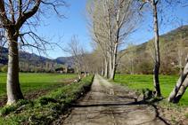 Camí de les Vernedes.