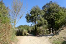 Camí a Sant Miquel.