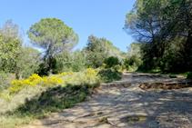Argelagues camí a Sant Miquel.
