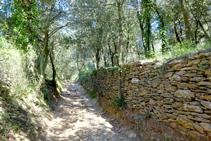 Parets de pedra seca a les Gavarres.