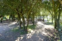 Zona de pícnic a prop del castell de Sant Miquel.