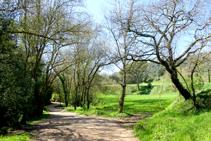 Camps de cereals a la vall de Sant Daniel.