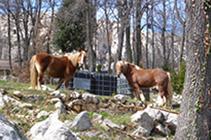 Cavalls, arribant a Sant Corneli.