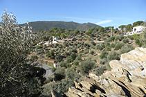 Camps d´oliveres i bosquets de pins sortint del poble. Al fons, la muntanya del Pení.