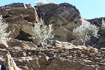 Estranyes formes de les roques erosionades pel vent i la sal.
