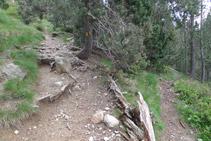 Seguim el camí de l´esquerra. Hi ha un senyal de color groc en un arbre.