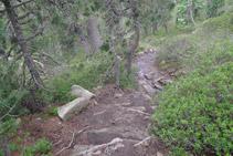 Descens pronunciat per l´interior del bosc.