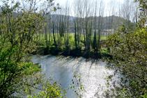 El riu prop del congost.