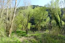 El bosc de ribera al congost.