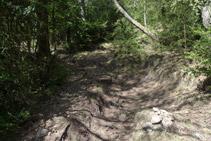 Pugem per un camí marcat amb fites de pedres.