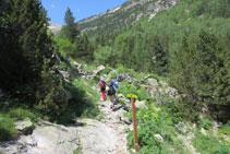 Deixem enrere el bosc frondós i ens endinsem a la vegetació alpina.