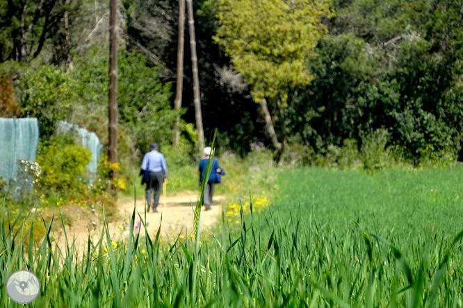 De Llafranc a Tamariu per camins tradicionals i de ronda 1