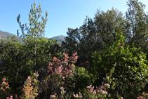 Detall del bosc camí a coll de Jou.