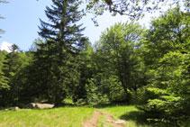 El camí s´endinsa per entre mig del bosc.