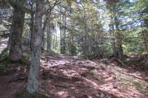 Pujant per entremig del bosc.