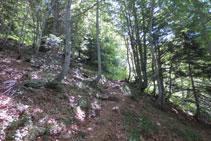 El camí avança per entre el bosc.