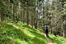 Caminet que s´endinsa al bosc de Jovell.
