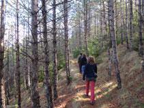 El bosc passa per la zona obaga del turó on s´alça el castell.