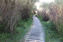Tram amb una passarel·la de fusta per poder caminar còmodament per una zona humida.