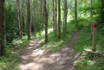 Durant el recorregut anem alternant els boscos i els prats.