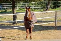 Cavall al costat del camí a Fitor.