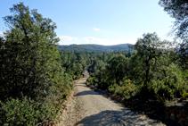 El bosc del massís de les Gavarres.